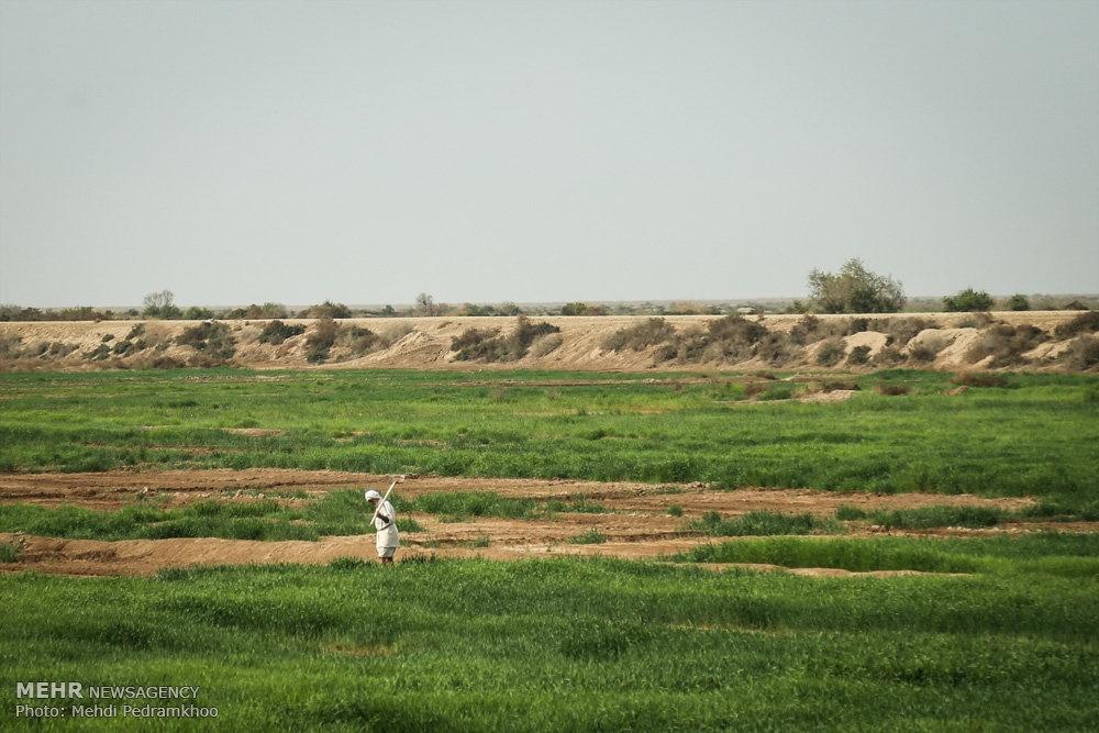 up 578e845bc3d6e75675553b48f759a960 تصاویر | روزگار غمانگیز تالابهای خوزستان   دریاچه ها و تالاب ها   محیط زیست سلامت