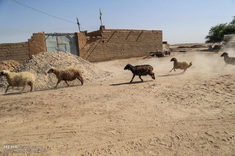 up 72bb2cbe8bf2717502ee475acdda5640 تصاویر | روزگار غمانگیز تالابهای خوزستان   دریاچه ها و تالاب ها   محیط زیست سلامت
