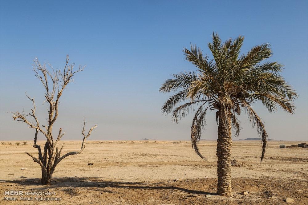 up 97045233589b41bd3cfef3844853681a تصاویر | روزگار غمانگیز تالابهای خوزستان   دریاچه ها و تالاب ها   محیط زیست سلامت