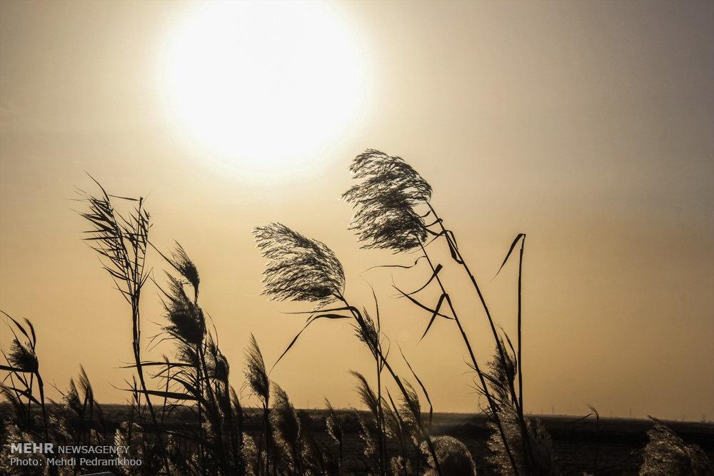 up a32aed702988e50781116f2b5214ab43 تصاویر | روزگار غمانگیز تالابهای خوزستان   دریاچه ها و تالاب ها   محیط زیست سلامت