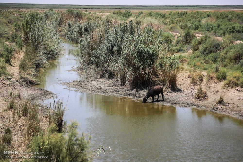 up ad7157d519e41d1ed1b603a0d9865f80 تصاویر | روزگار غمانگیز تالابهای خوزستان   دریاچه ها و تالاب ها   محیط زیست سلامت