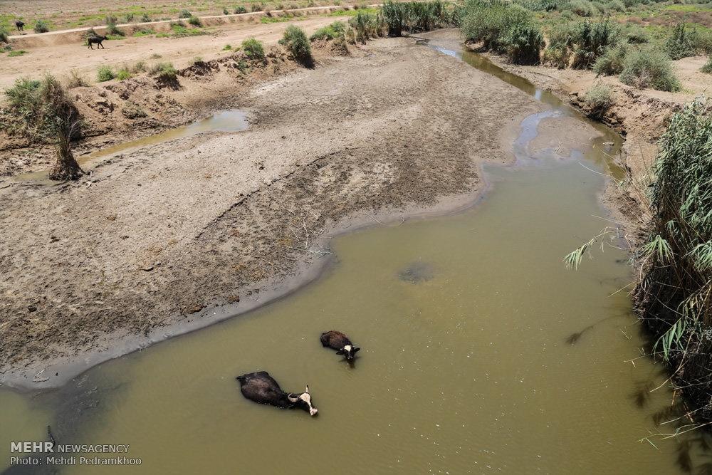 up ea0d0f94838136798b2cd8109dedb844 تصاویر | روزگار غمانگیز تالابهای خوزستان   دریاچه ها و تالاب ها   محیط زیست سلامت